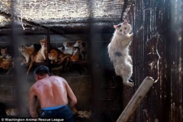 Xúc động với ánh mắt cầu xin của chú mèo trong lò mổ