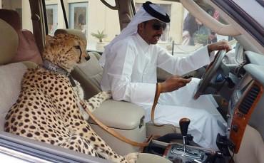 """Những điều """"đáng ghét"""" ở Dubai có thể bạn chưa biết"""